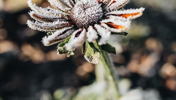 Thumb_wide_kaboompics_frozen_flower